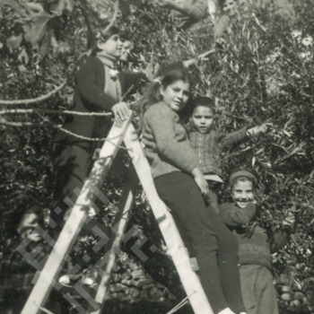 ElKhouri_Cousins_in_the_Fig_Trees_Kour_wm.jpg