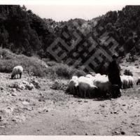 Mokarzel 1-2-1-35 Pastoral_wm.tif