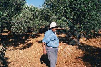 Ishak_Man with Olive Trees-wm.jpg
