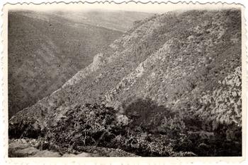 Mokarzel 2-1-8-9 Landscape_wm.tif